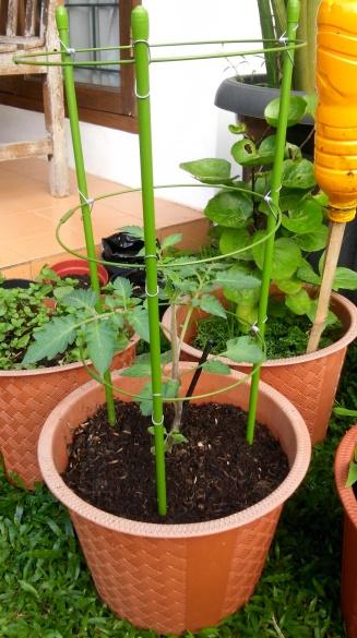 tomatterawat